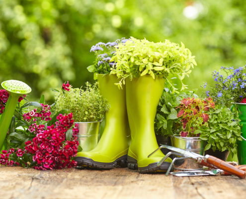 Maintenance of flower gardens