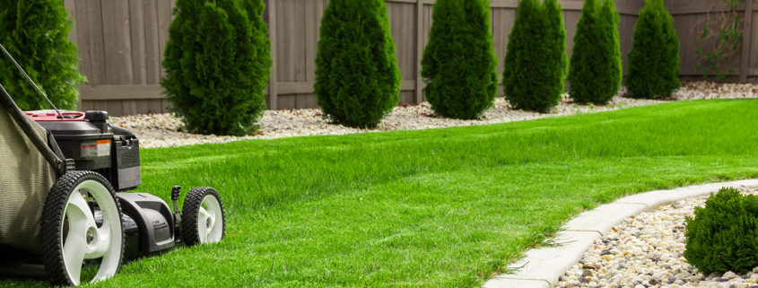 Maintenance of lawn